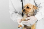 Pros and Cons of Pet Health Insurance